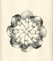http://www.mightylark.com/files/gimgs/th-37_Web_Sooty_Head_Mandala.jpg